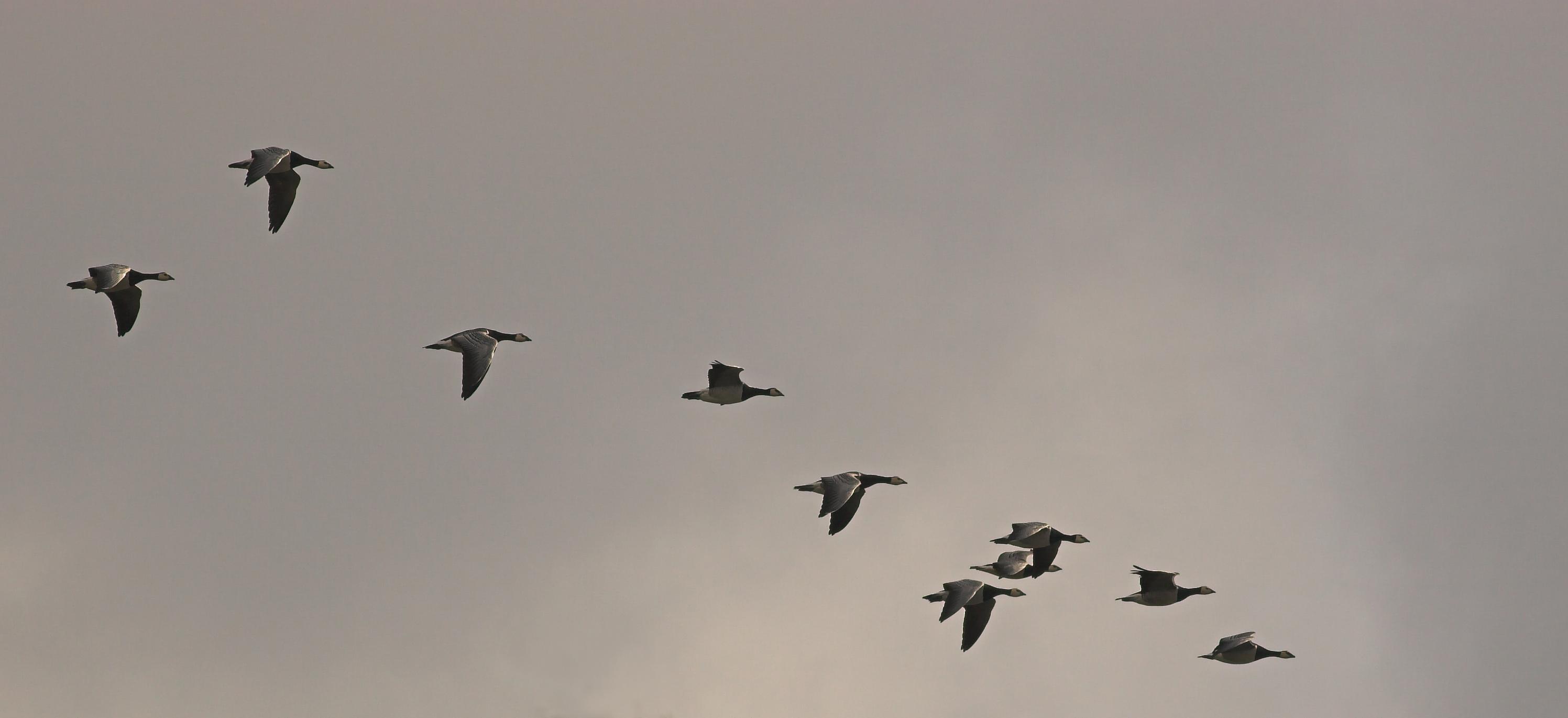 Birds   AnimalWise